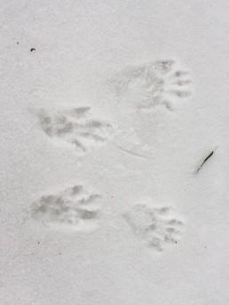 foot-print.jpg